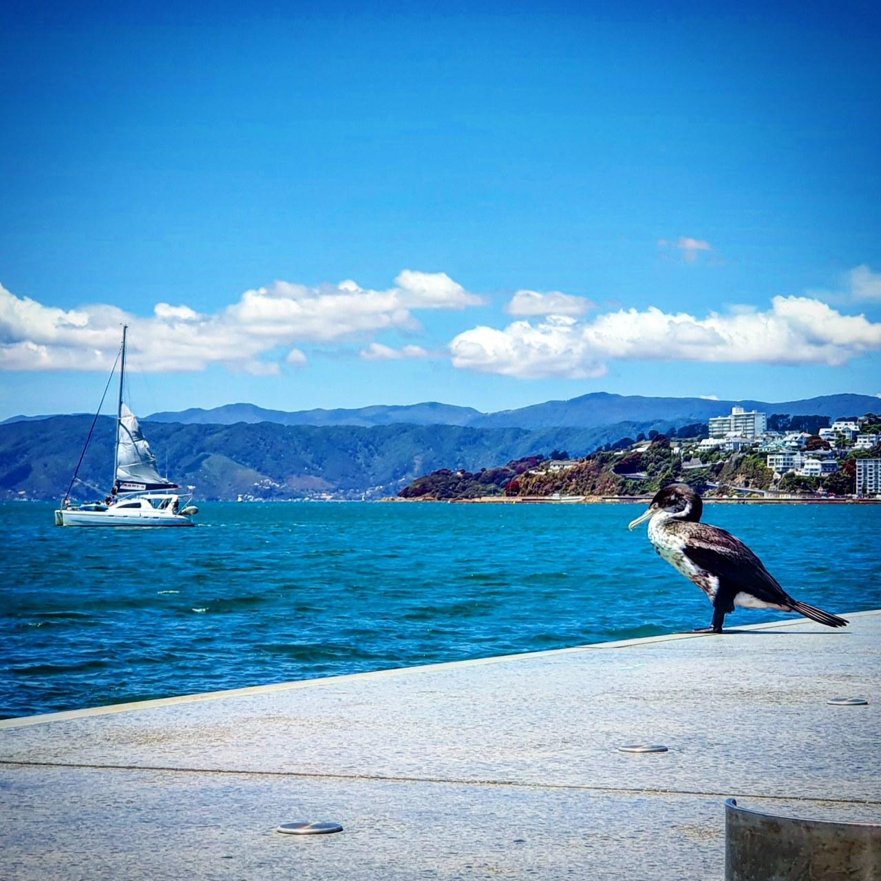 Day 120: Love Welly – WaterfrontWanderings