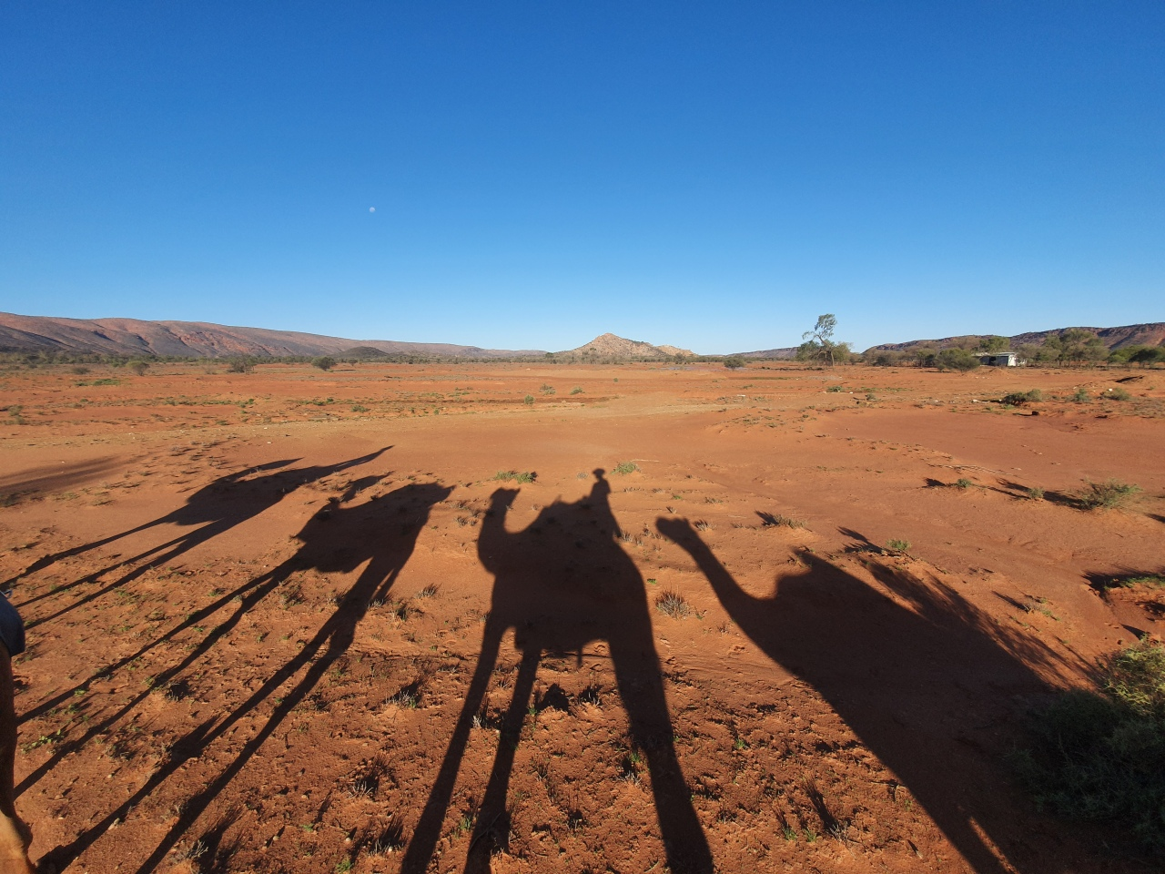 Day 159: Riding Camels in the Outback