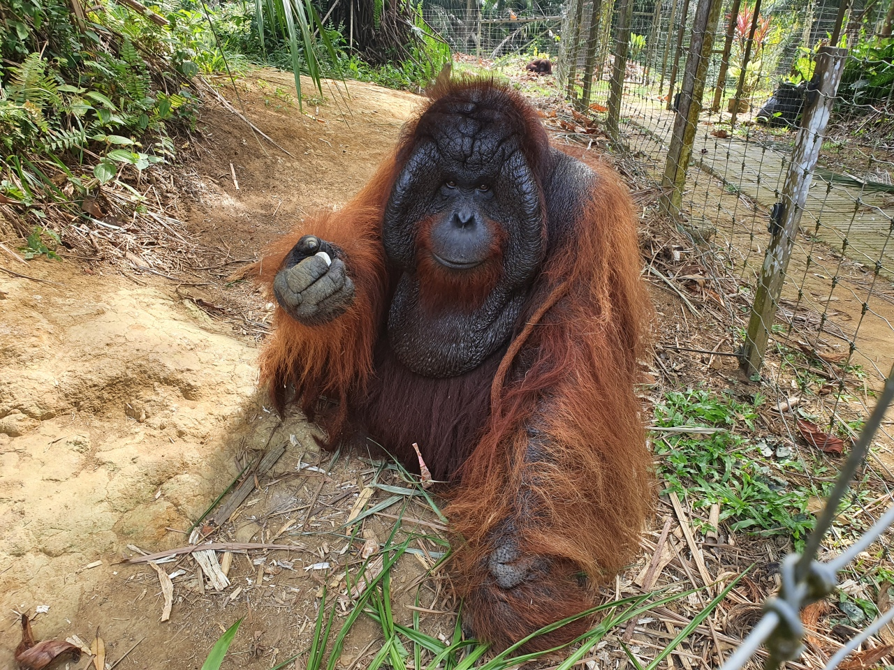 Day 186: A day out with the orangutans